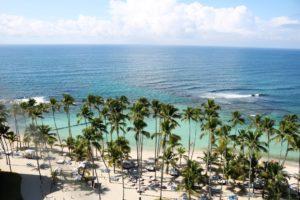 caribbean palm tree back scene
